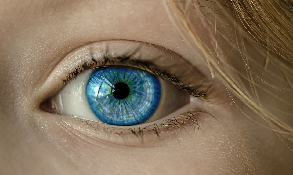 Euphrasia Augentropfen - Auge